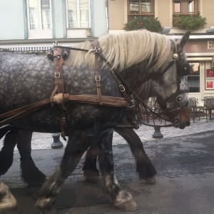 Honfleur carriage ride