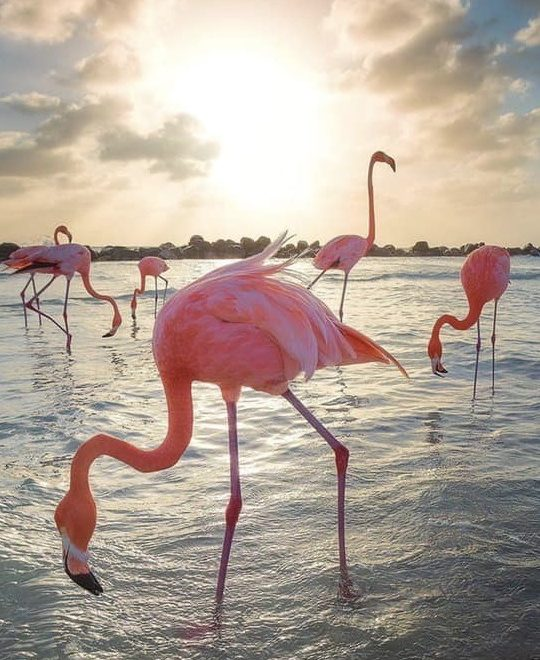photography flamingo Aruba